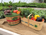 Student Gardens Will Deliver Fresh Produce to Bridge Card Holders' Home