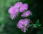 Wild Flowers growing in the Hamlet of Clot de Main